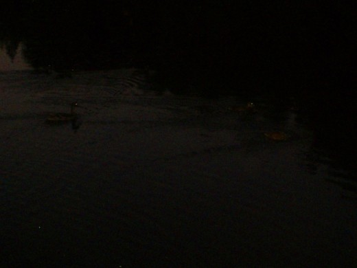 The ducks make a little stream behind them as they swim along.