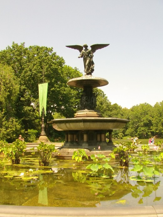 Turtle Pond (Images I Captured)