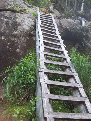Once in a while, just when you're about to surrender yourself to the mountain and die, Nature throws you a bone, like this ladder.