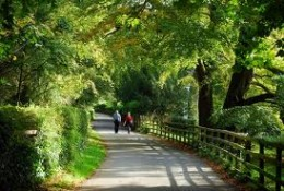 Abbey Road, Knaresborough - a leafy retreat to get away from the hubbub of town life