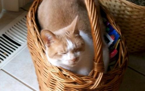 Like I said, Punkin will sleep anywhere!