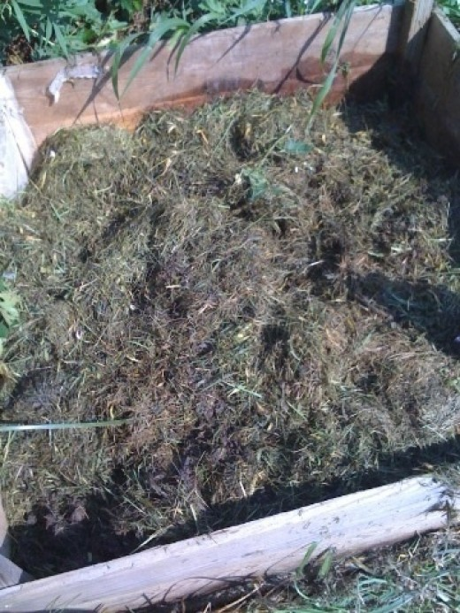 This load of grass clippings should compost in about 2-3 weeks now that it has been mixed in with the previous batch.