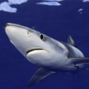 sharkfacts profile image