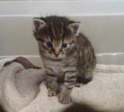 My Pretty Little Baby Cat