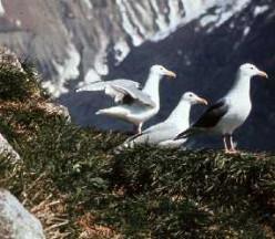 Ideas for Outdoor Activities at Glacier Bay, Alaska