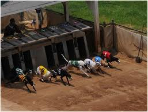 Live GreyHound Racing at the Birmingham Race Course is one of the biggest attractions on the grounds.