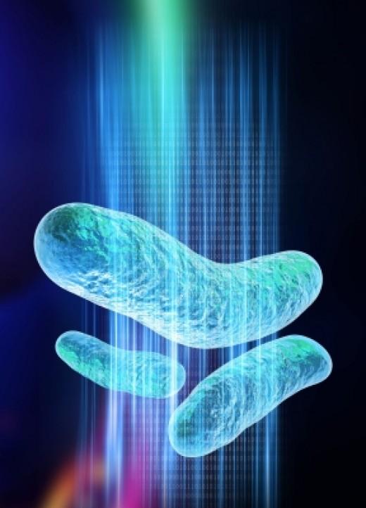 Graphic representation of E. coli