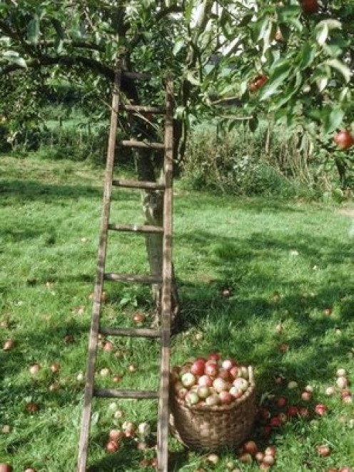 mmmm...Fresh apple pie!!!