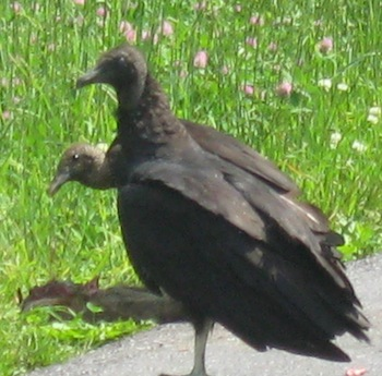 Names associated with death, such as Vulture, are popular Halloween names.
