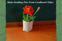 Use leftover toilet paper rolls to make seed pots that can be transplanted directly into the garden.