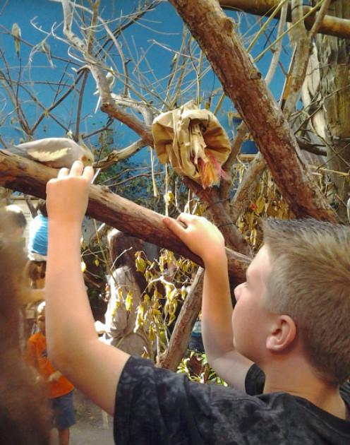 Feeding the birds at Woodland Park Zoo
