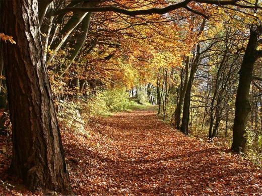 Herbstwald in Deutschland Martin Heiss