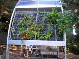 This vertical hydroponics platform grows vegetables and flowering plants without the use of soil.