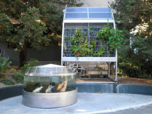 An aquaponics/hydroponics and solar growing installation at Coyote Point in San Mateo Ca. This is a great example of a living, thriving, self-sustainable ecosystem. Built by San Francisco Bay Area company Inka Biospheric Systems.