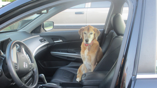 Sam - Waiting to go for a ride