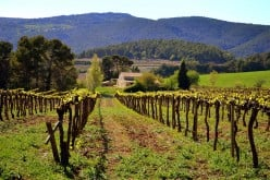 An Introduction to Spanish Wines