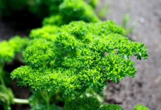Add fresh parsley