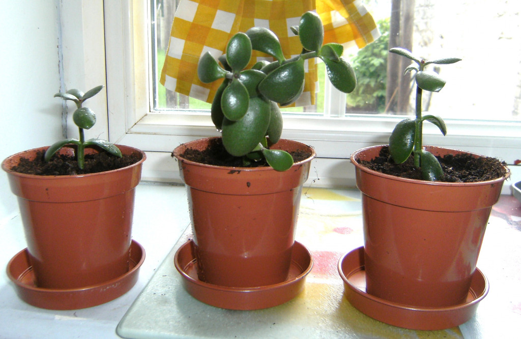 Easy to grow houseplants hubpages - Easy maintenance house plants ...