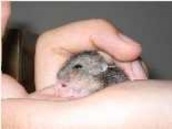 -=Holding_A_Hamster=-