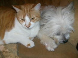Cats and dogs CAN get along!