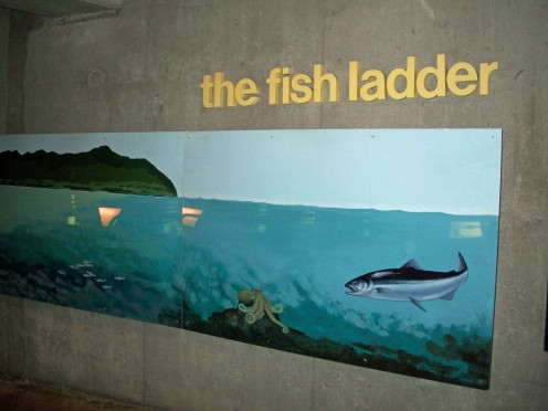 Fish Ladder at the Ballard Locks