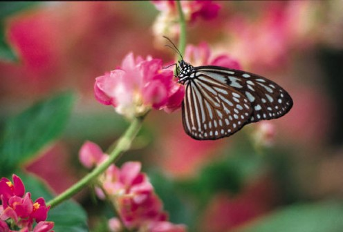 """What the caterpillar calls the end of the world, the master calls a butterfly.""  --Richard Bach"