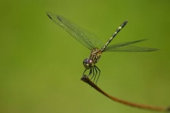 The Difference Between The Damselfly & Dragonfly
