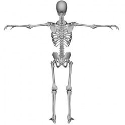 Strong Bones -  Tips to Avoid Osteoporosis