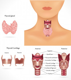 What You Need to Know About Hyperthyroidism?