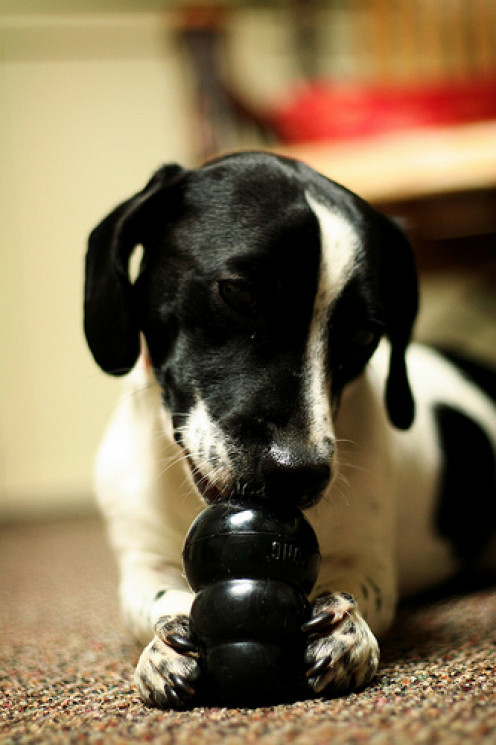 Give your pup clean rubber toys as opposed to slimy rawhides!