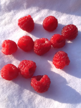 Enjoy fresh, local, organic raspberries and other delicious fruits and veggies when you join and support a CSA in your area.