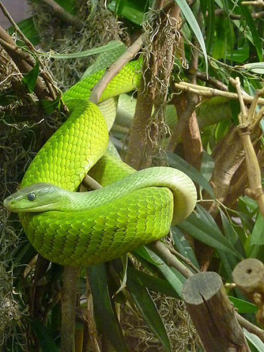 The complicated compounds of snake venom are life savers as well as lethal weapons.