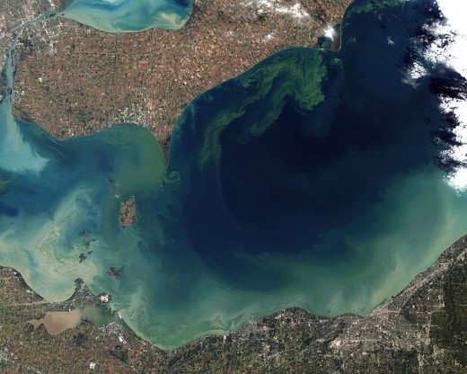 algae bloom in lake Erie