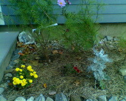 My flower garden has space for more plants