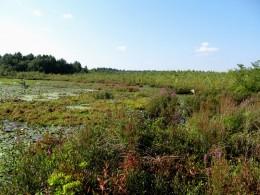 Many aquatic flowering plants