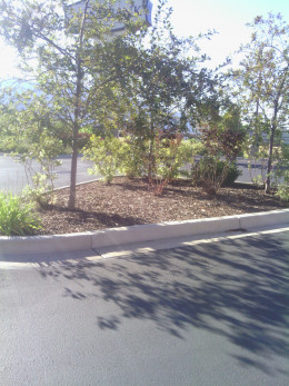 Island in the middle of the parking strip.  Zions Bank in my community.