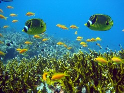 How to Protect and Save Marine Life