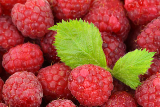 You can use fresh or frozen raspberries for this raspberry cordial recipe