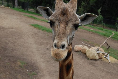 The Santa Barbara Zoo offers something magical for everyone.