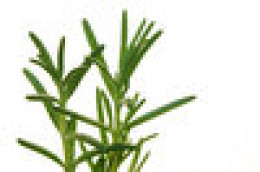 Use fresh or dried Rosemary