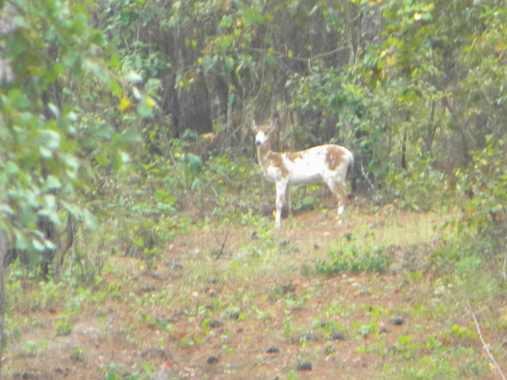 The best cheap or low priced deer and turkey hunting for Best deer blinds