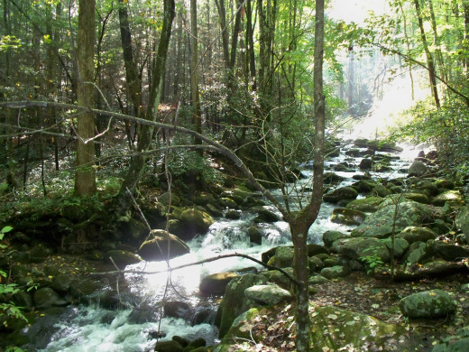 Nice little stream in Great Smoky Mountain National Park
