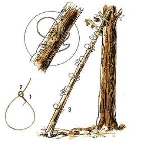 Example of a good squirrel snare set-up