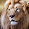 zaton profile image