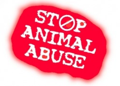 Animals are just like us, stop the abuse.