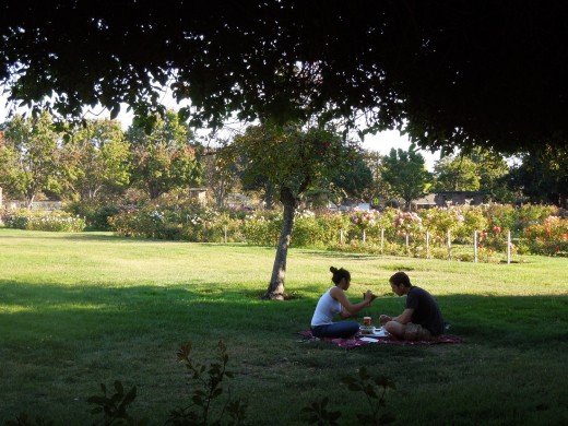 People Having A Picnic at Municipal Rose Garden in San Jose CA