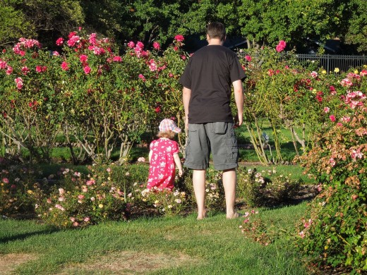 A Little Girl Walking Alongside with Her Daddy at Municipal Rose Garden in San Jose CA