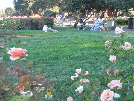 A Family Resting at Municipal Rose Garden in San Jose CA