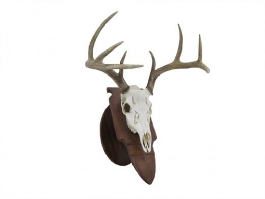 European Style Deer Mount