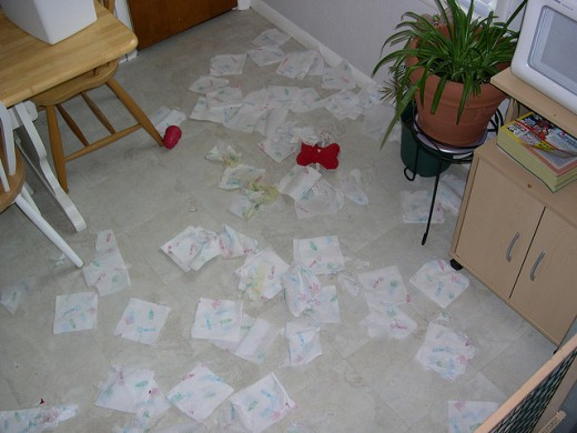 This is what your house might look like if you do not get your dogs separation anxiety under control.